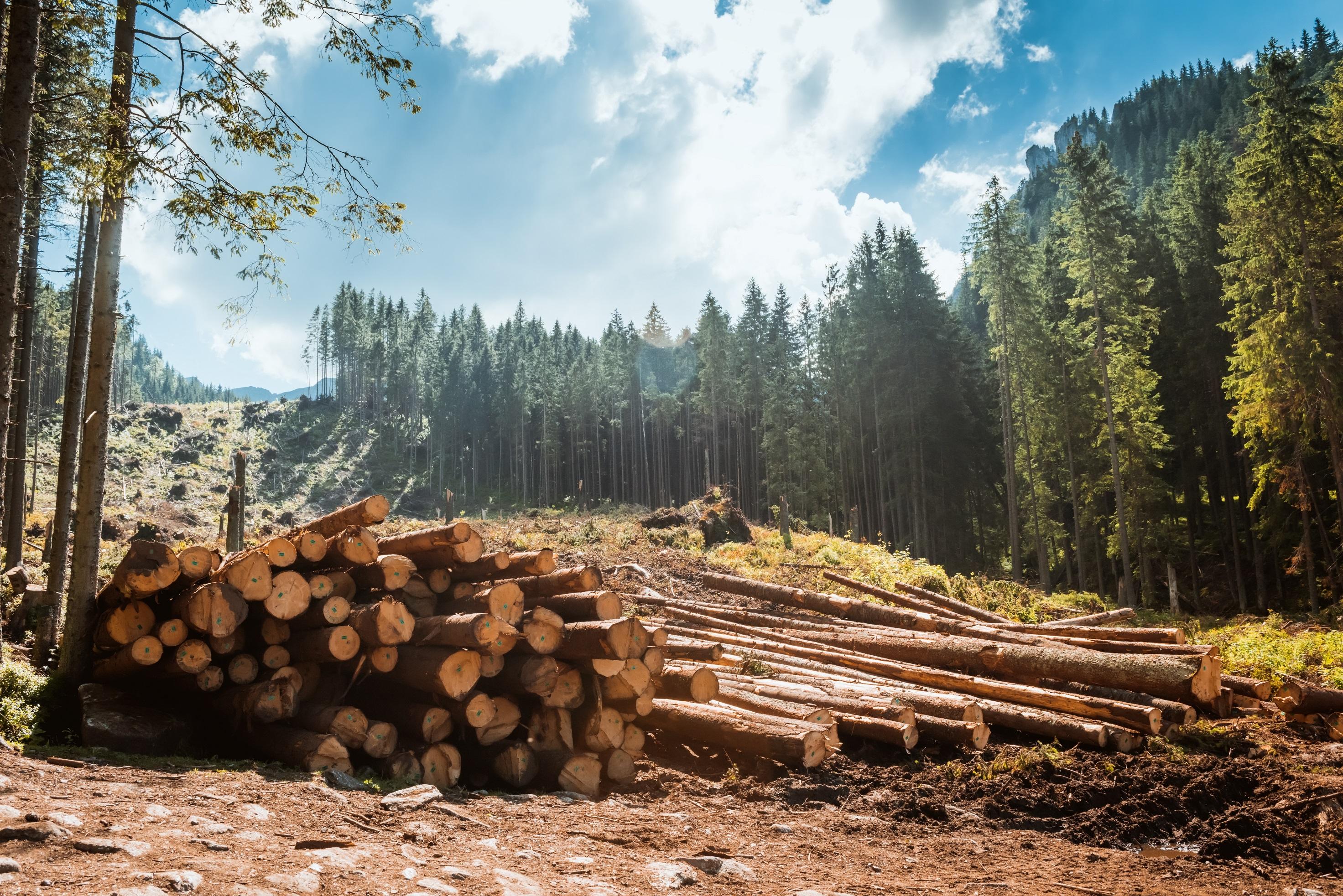 Logging-forest